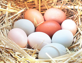 FECA to train 18000 Ondo youths on egg production value chain